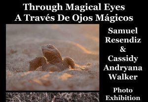 Through Magical Eyes