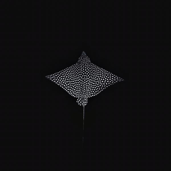 Apagando Luces by Samuel Resendiz